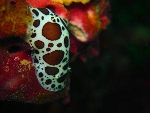 embarrancat-submarinismo-figueres-inmersion61
